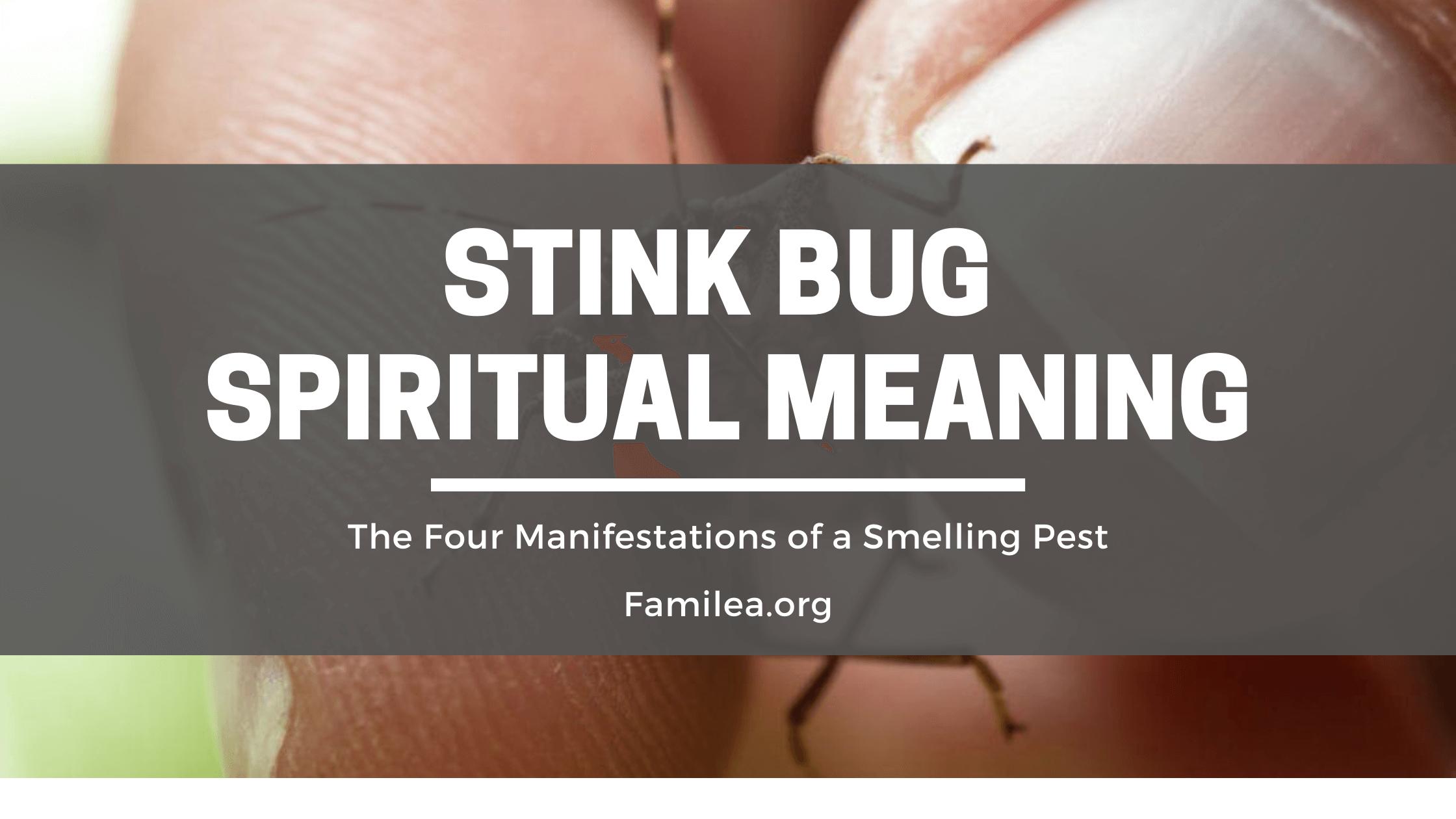 Stink Bug Spiritual Meaning